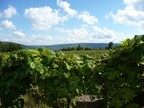 Canandaigua Wine Trail